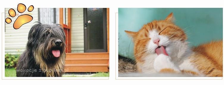 Pies i kot na wakacjach w apartamencie noclegowym w Zwierzyńcu - wakacje z pupilem.