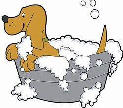 Mycie i strzyżenie dla psów u zaprzyjaźnionego weterynarza.